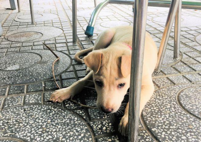 ハーティエン港の食堂にいた子犬