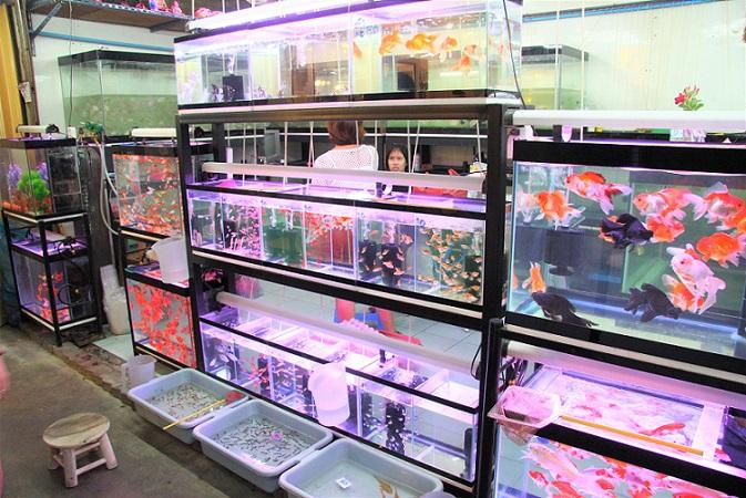 バンコクのチャトゥチャック市場の熱帯魚