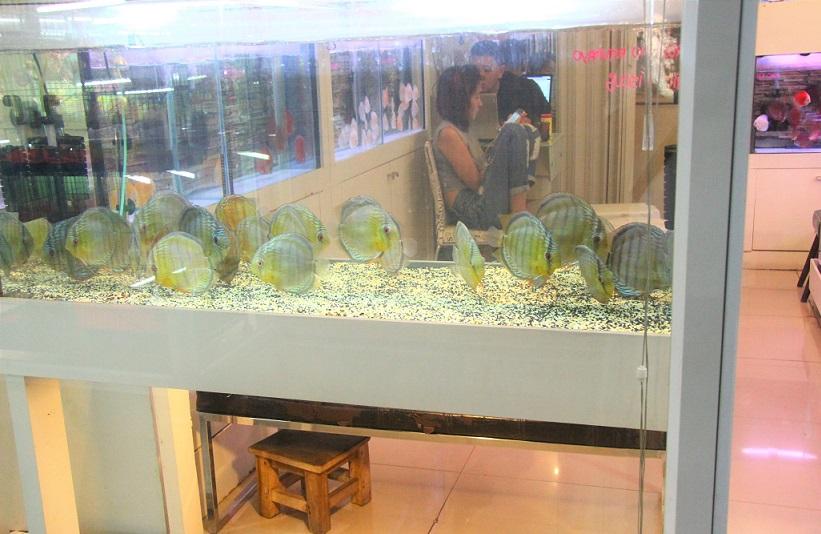 タイ人にも熱帯魚の愛好家が多い