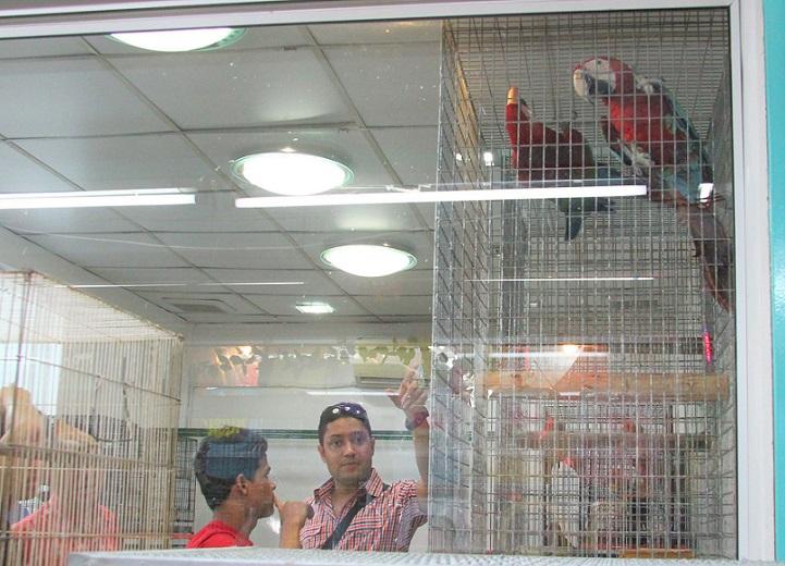 バンコクチャトゥチャックではコンゴウオウムなどの希少種が激安で売られている|タイ旅行