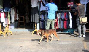 チャトゥチャックマーケットを歩く犬