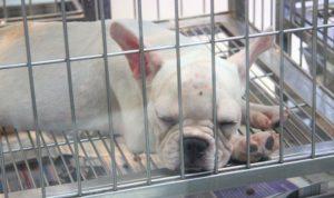 バンコクの市場の子犬|タイ旅行