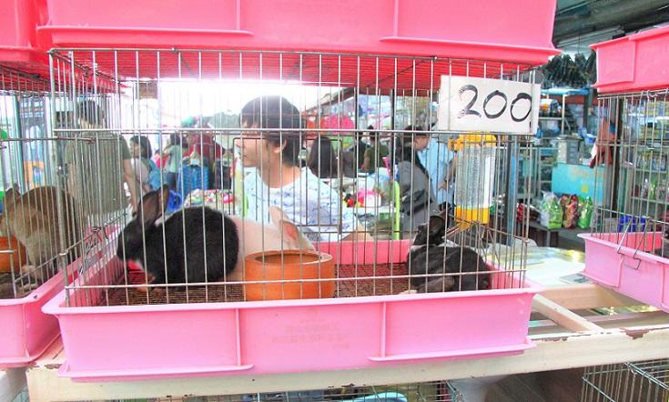 バンコクのチャトゥチャック市場ではウサギの価格は約600円|タイお勧め観光スポット