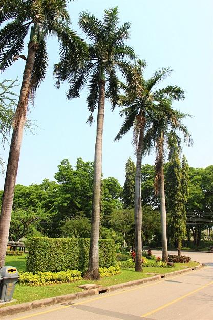 バンコクのお勧めスポット、ルンピ二ー公園内の道路と木の写真【タイ旅行】