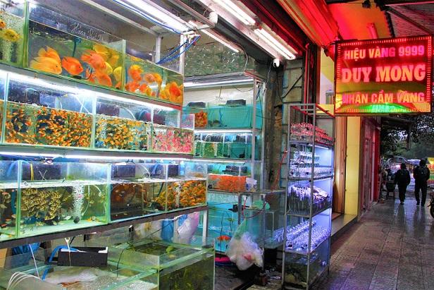 フエの観賞魚店で売られる熱帯魚の写真|ベトナム旅行