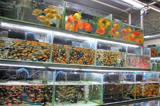 ベトナム人も熱帯魚が大好きでフエでたくさん売られている写真