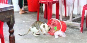 牛肉ベースの出汁で作ったお粥も美味しいCháo Bò Đập Đáで飼われている猫の写真